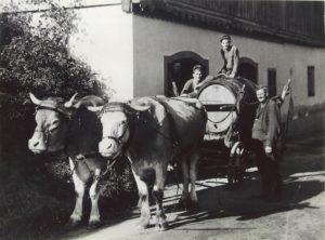 Weinfuhrwerk 1950
